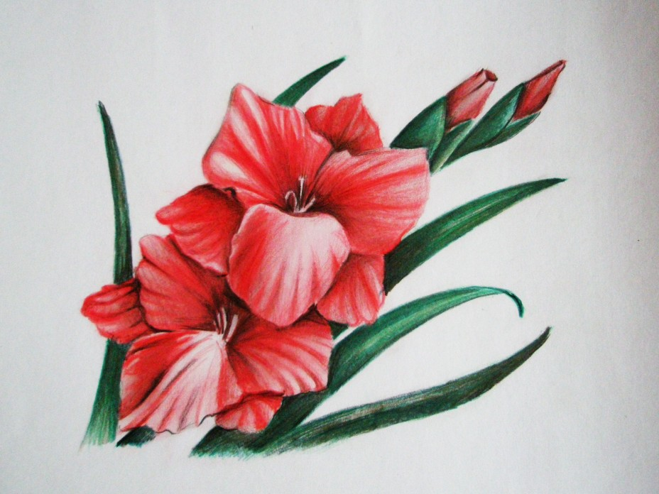 Цветы карандашами цветными поэтапно